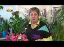 Бегония - Цветочная лавка
