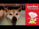Забавный пёс ДЖЕМИК