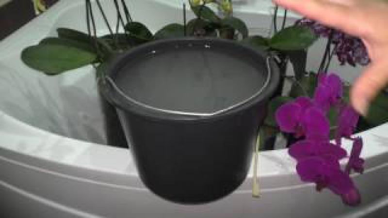 Орхидеи Витаминный коктель глюкоза и янтарная кислота