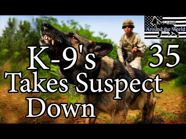 K-9's Takes Suspect Down 35