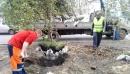 Высадка деревьев в Барнауле
