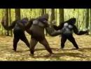 Maymun raqsi