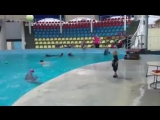 Dolphin Playing with Boy =Дельфин, играющий с Мальчиком