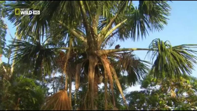 Дикая природа Амазонки Колыбель жизни