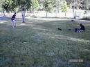 Случайные кадры нападения стаи хищников на человека · coub, коуб