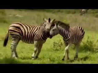 Природа Дикой южной Африки- док. фильм САФАРИ BBC