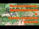 Пасынкование, формирование и подвязка кустов томатов в теплице