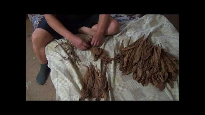23.Ферментация и отделение центральной жилы у табачного листа.