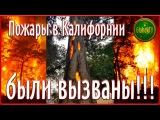 Деревья горят изнутри. Пожары в Калифорнии не были дикие , они были вызваны