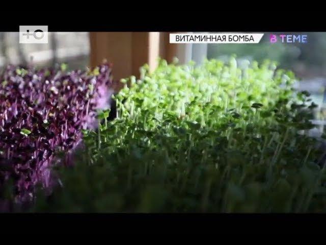 Микрозелень - главный тренд здорового питания