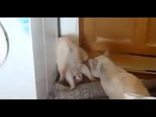 Когда кончились аргументы, прикинься идиотом)