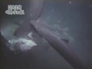 Megalodon sighted in Mariana Trench