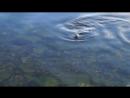 21.05.2017. Морские котики, мы их видели урааа! Они подплывают к людям на столько близко-чувства зашкаливают