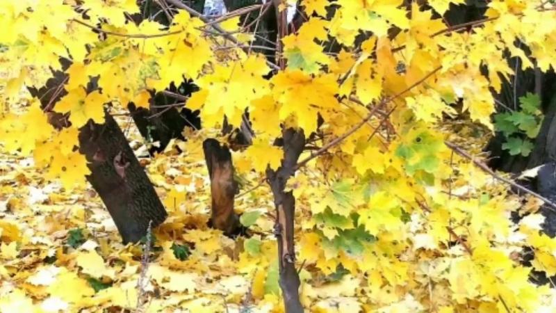 7б Клип Осень в Пироговском