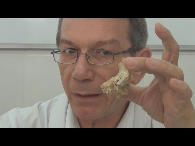 Височная кость. Каналы височной кости
