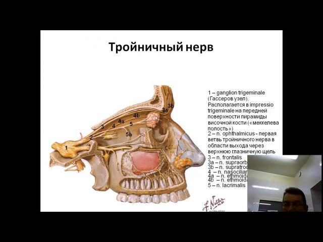 Тройничный нерв: анимационная схема