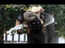 Темная сторона слонов. Слоны убийцы .Документальный фильм