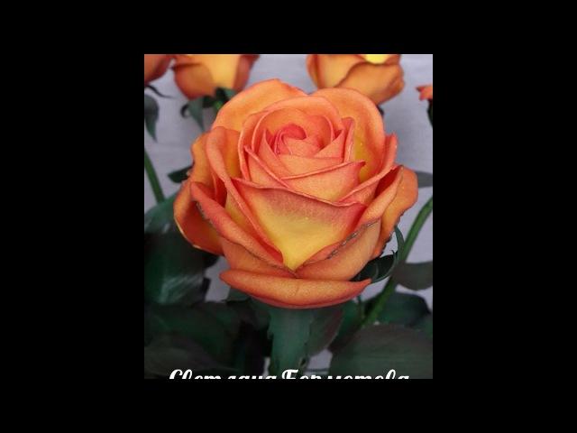 Бутонная роза из китайского фоамирана часть 2