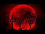 Kalpataru Tree - Red Moon