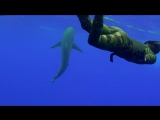Freediving with Sharks in Middle of Ocean