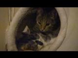 4 Кошки. День четвертый. Знакомство состоялось.