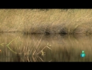 Grandes documentales África salvaje El delta del río Okavango