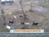 Большая стая бродячих собак оккупировала двор в Закамске