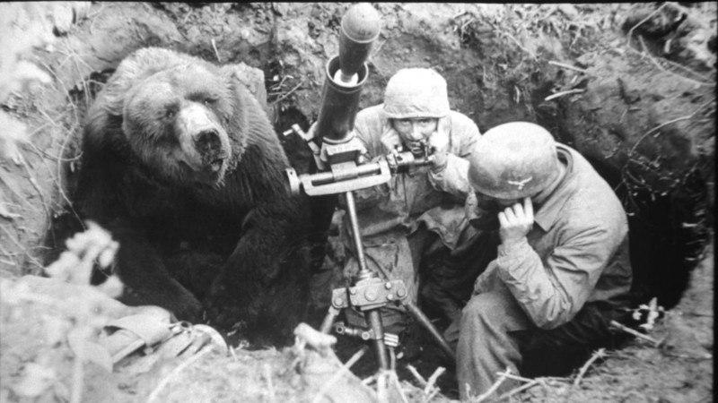 медведь десантник люфтваффе