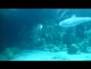 Дельфины пускают колечки