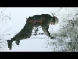 Беларусь на мяжы катастрофы: экасістэмы выміраюць праз забруджаную ваду | Экология в Беларуси <#Белсат>