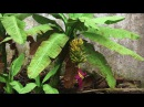 ABC TV | How To Make Banana Tree From Crepe Paper - Craft Tutorial