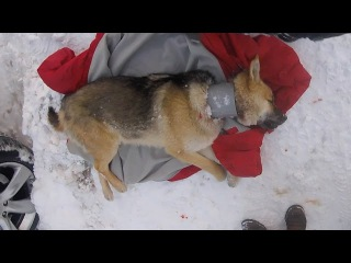 Stray Dog With Pipe Around Neck Rescued