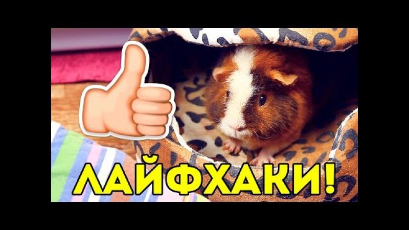ЛАЙФХАКИ для Владельцев Морских Свинок SvinkiShow