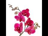 Глюкоза для Орхидеи. Подкормка  орхидеи сахарным сиропом