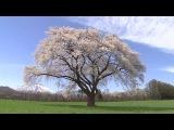 Красота природы и Красивейшая Музыка Саксофона KENNY G COLLECTION HQ