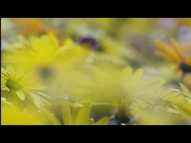 BBC_ Планета Земля - Великие Равнины (7 серия)