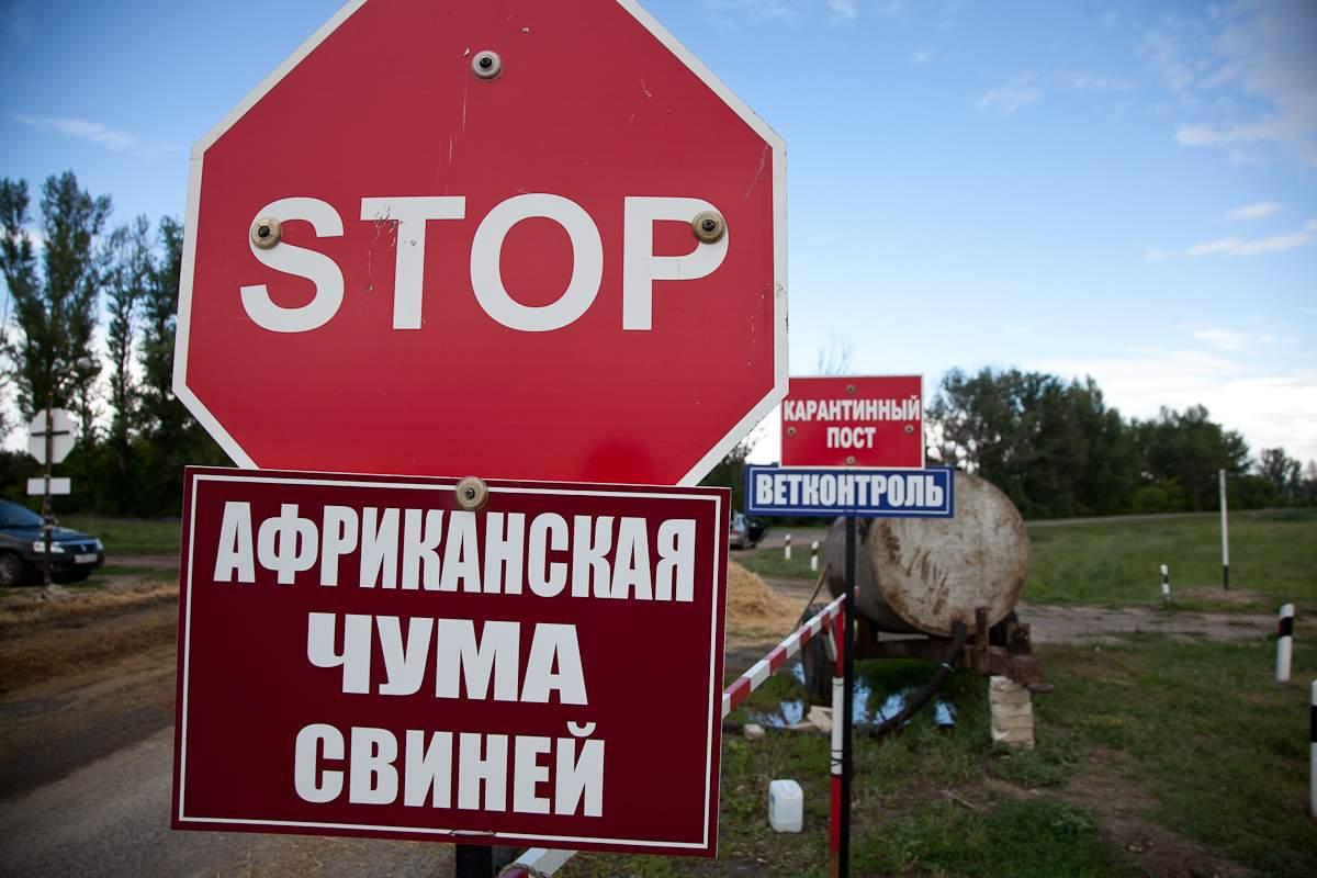 В Ростовской области отменен карантин по африканской чуме свиней