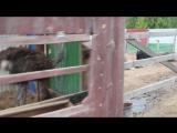 страусиная ферма)макарьево)