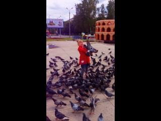 ох уж эти голуби