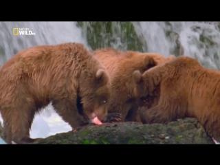 Мир дикой природы / World of the Wild (2016) 12 из 13 Американские горы / American Mountains