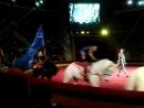 В гостях у сказки Курский цирк - обезьяны джигиты