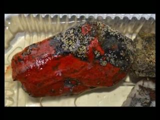Таинственная Находка - Привезенный Камень с Перевала Дятлова (Горы Мертвецов) Поменял Свой Цвет на Кроваво-Красный