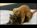 Oops! Wrong Hole - The Cat Version