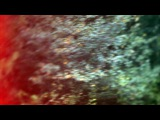 Светлана Беляева - Молодое вино - Видео Dailymotion