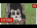 Interview with John Downer and Rob Pilley - Spy in the Wild - BBC One