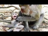 Old Mom Monkey Hit Her Baby Because Her Baby Monkey Always Bother