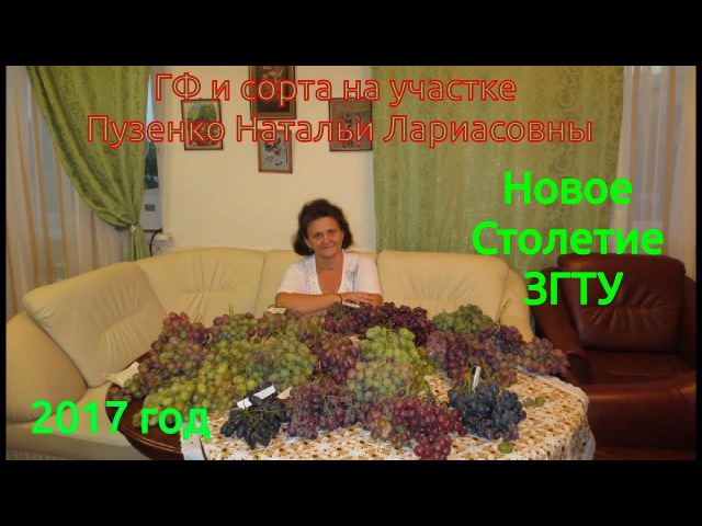 НОВОЕ СТОЛЕТИЕ ЗГТУ - ранний беспроблемный сорт винограда (Пузенко Наталья Лариасовна).