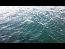 Дельфины в Керчи.