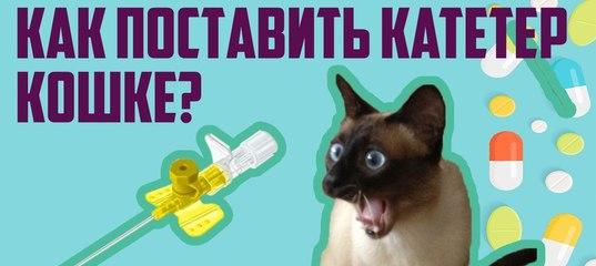 Анфлурон для кошек инструкция