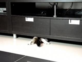 Эщё одно доказательство что кот это жидкость)